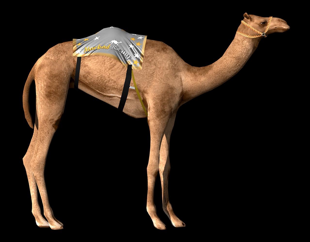 Markad Racing 2 Camel