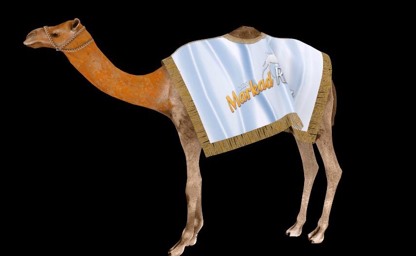 Markad Racing Camel